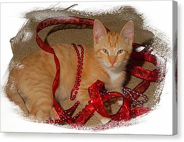 Orange Kitten With Red Ribbon Canvas Print by Judy Deist