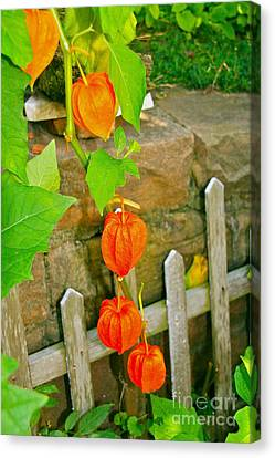 Orange Lanterns Canvas Print