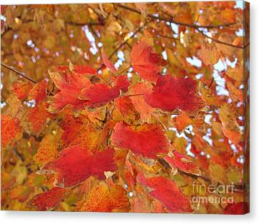 Orange Leaves 4 Canvas Print