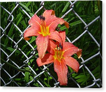 Canvas Print featuring the photograph Orange Lilly And Dewdrops by Frank Wickham