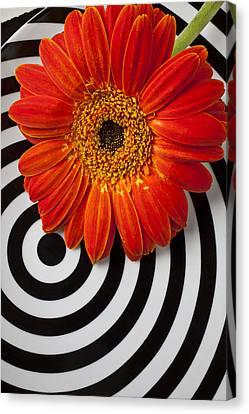 Orange Mum With Circles Canvas Print by Garry Gay