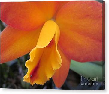 Flowers Canvas Print - Orange Orchid Heart by Judee Stalmack