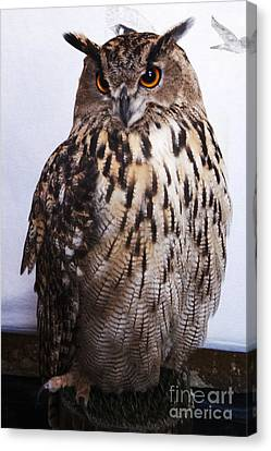 Orange Owl Eyes Canvas Print