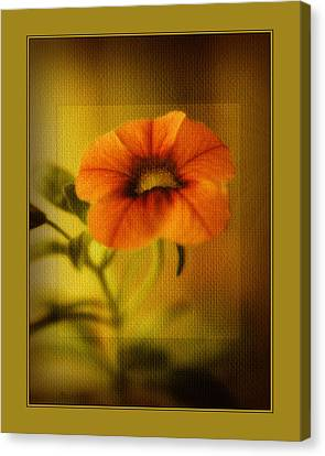 Orange Pansy Canvas Print by Bonnie Bruno