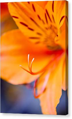 Canvas Print - Orange Passion by Kimberly Deverell
