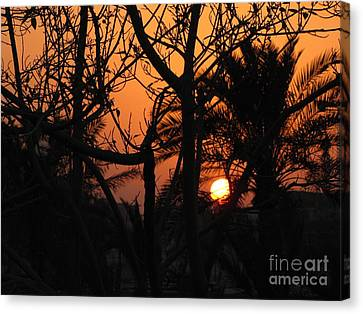 Orange Sky Canvas Print by Will Cardoso