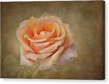 Orange Sorbet Canvas Print