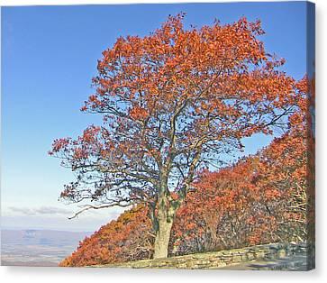 Canvas Print featuring the photograph Orange Tree And Blue Sky by Shirin Shahram Badie