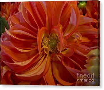 Orange You Happy Canvas Print by Arlene Carmel