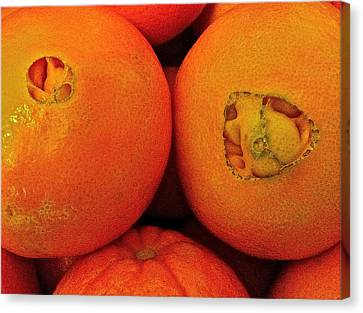 Oranges Canvas Print by Bill Owen