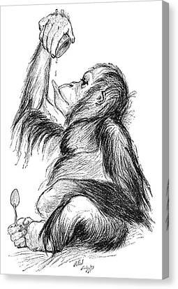 Orangutan, 19th Century Canvas Print by