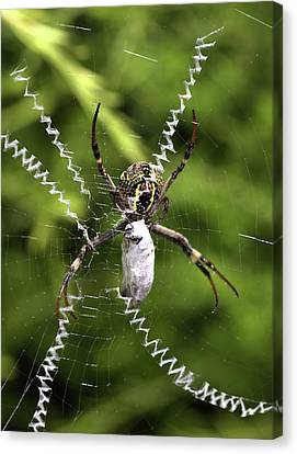 Canvas Print featuring the photograph Orb Weaver by Joy Watson