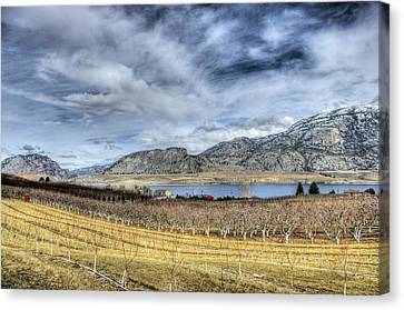 Orchards And Vineyards Canvas Print by John  Greaves
