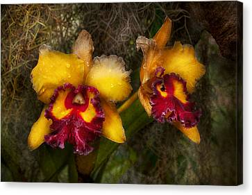 Orchid - Cattleya - Dripping With Passion  Canvas Print by Mike Savad
