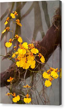 Orchid - Golden Morning  Canvas Print by Mike Savad
