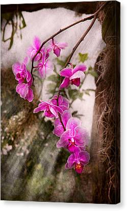 Orchid - Tropical Passion Canvas Print by Mike Savad