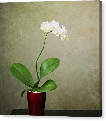 Orchid 2 Canvas Print by Mary Hershberger