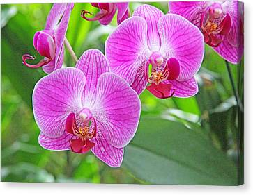 Orchid Beauty Canvas Print by Becky Lodes