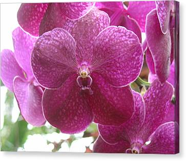 Canvas Print featuring the photograph Orchid Cluster by Charles and Melisa Morrison