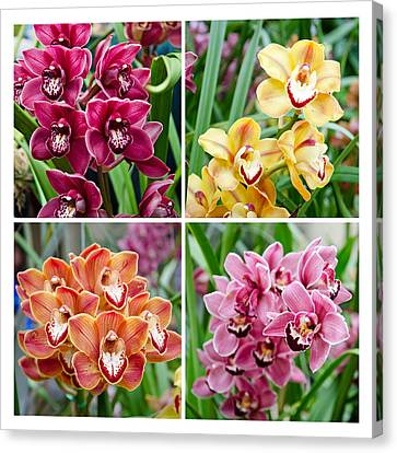 Orchid Collage Canvas Print