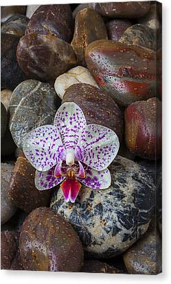 Orchid On Wet Rocks Canvas Print by Garry Gay
