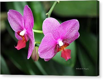 Orchid Purple Canvas Print