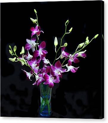 Orchid Spray. Canvas Print by Terence Davis