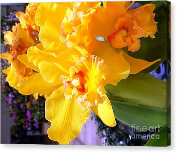 Orchid Canvas Print by Vicky Tarcau