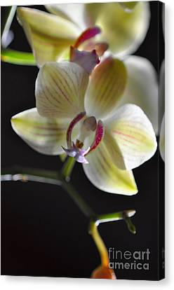 Canvas Print featuring the photograph Orchidee by Sylvie Leandre
