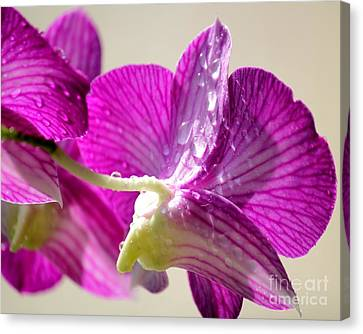 Orchids And Raindrops Canvas Print by Theresa Willingham