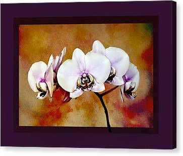 Canvas Print featuring the painting Orchids by Mary Morawska