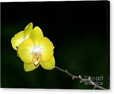 Florida Flowers Canvas Print - Orchids To The Left by Sabrina L Ryan