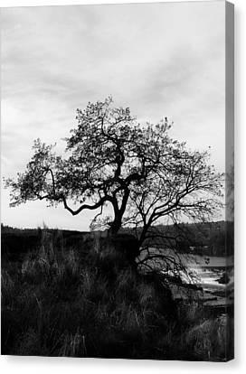Oregon City Tree Canvas Print