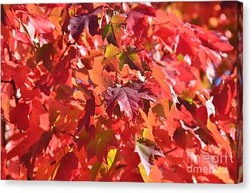 Canvas Print featuring the photograph Oregon Red by Mindy Bench