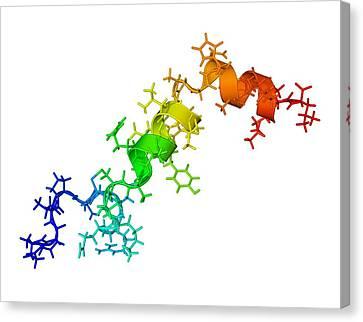 Orexin-a Hormone Molecule Canvas Print by Laguna Design
