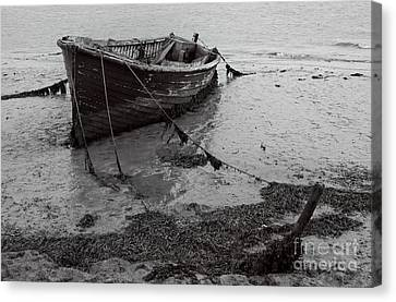 Orford Wreck Canvas Print by Darren Burroughs
