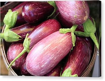 Organic Eggplant Canvas Print by Wendy Connett