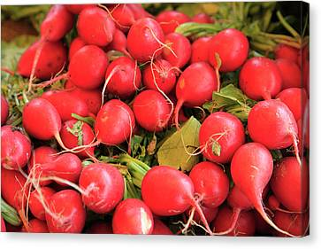 Organic Radishes Canvas Print by Wendy Connett