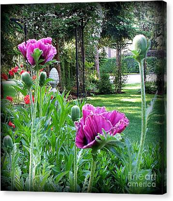 Canvas Print featuring the photograph Oriental Poppies by Tanya  Searcy