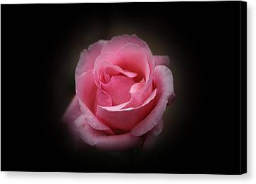 Canvas Print featuring the photograph Original Rose Petals by Anthony Rego