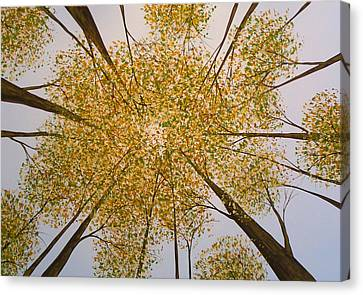 Original Tree Painting Look Up By Amy Giacomelli Canvas Print by Amy Giacomelli