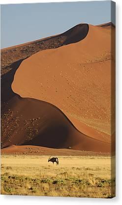 Oryx II Canvas Print by Christian Heeb