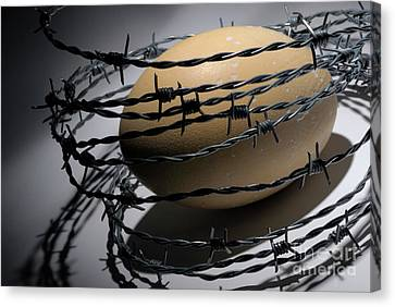 Ostrich Egg Surrounded By Barbed Wire Canvas Print by Sami Sarkis