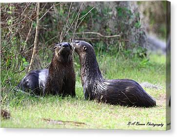 Otter Buddies Canvas Print by Barbara Bowen
