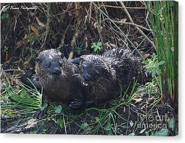 Otter Couple Canvas Print by Barbara Bowen