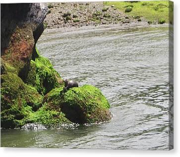 Canvas Print featuring the photograph Otter In Bellingham Bay by Karen Molenaar Terrell