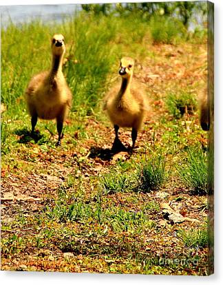 Out For A Walk Canvas Print