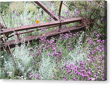 Canvas Print featuring the photograph Out Of Danger Nb by Susan Alvaro