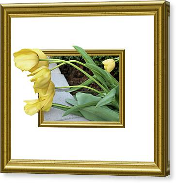 Out Of Frame Yellow Tulips Canvas Print by Kristin Elmquist