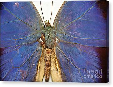 Out Of The Blue.. Canvas Print